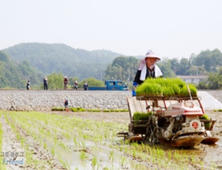 Help the villagers out by planting and harvesting rice